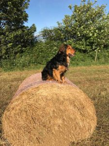 Our organic farm's best guard